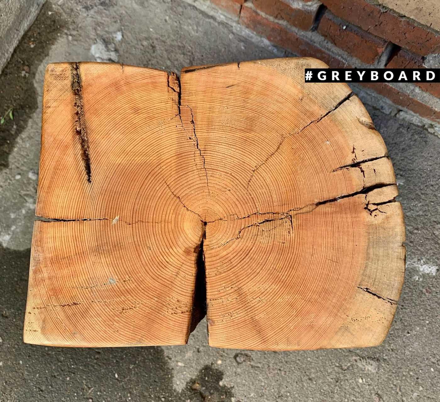 Пеньки из дерева возрастом около 200 лет